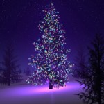 Christmas Tree: A Brief History